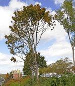 Bäume werden gerettet