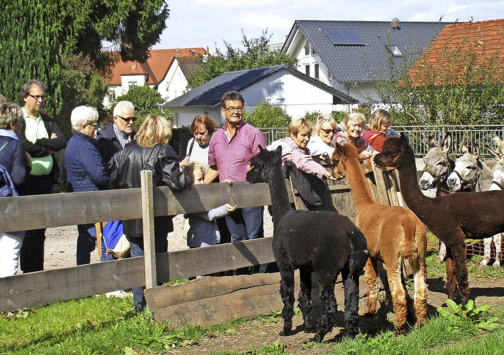 Im Dorf unterwegs: Beim Sonnenhof Krum... die dort grasenden Esel und Alpakas.   | Foto: BZ