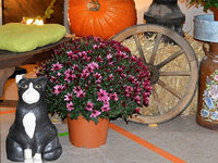 Fotos: Oktoberfest des Musikvereins Nollingen