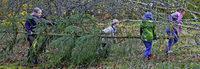 Waldrandbiotop auf Vordermann gebracht