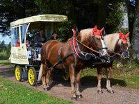Rollstuhlfahrer können am Hochrhein den Kutscher-Führerschein machen