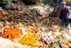 Fotos: Goldener Herbst macht feine Laune