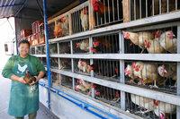 Mobiler Geflügelverkauf bietet lebende Hühner an