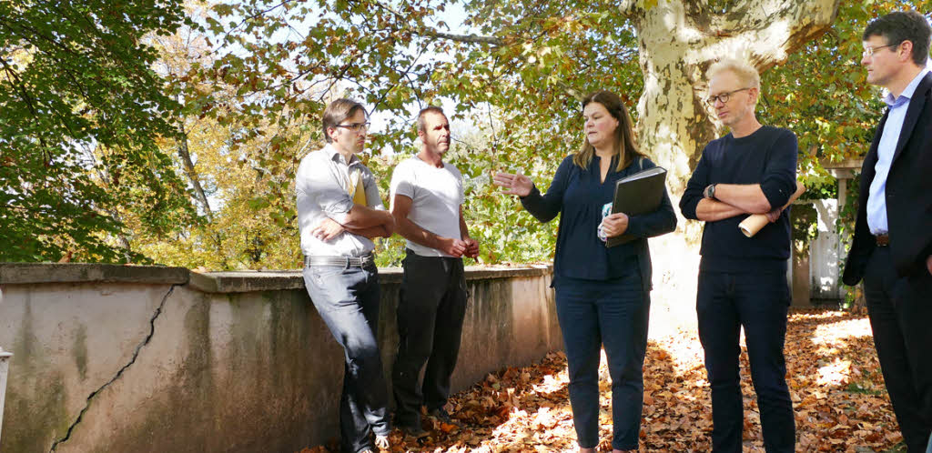 Denkmalpflege sticht Baumschutz - Offenburg - Badische Zeitung