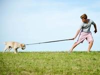 Hunde müssen in Rheinfelden an die Leine, das ist Pflicht