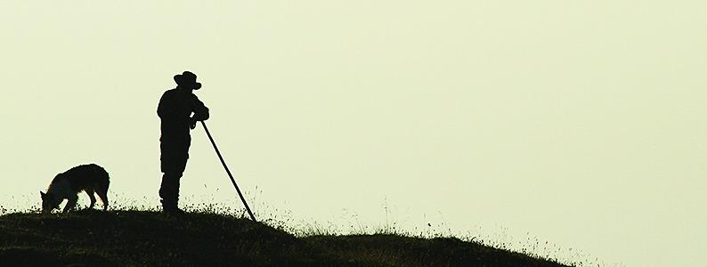 Schäfer können im Südwesten von ihrer Arbeit kaum leben