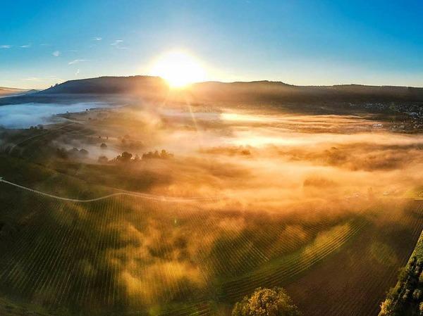 Ein toller Sonnenaufgang über den Weinreben bei Friesenheim.