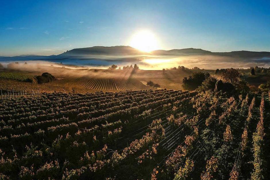 Ein toller Sonnenaufgang über den Weinreben bei Friesenheim. (Foto: Michael Sauer)