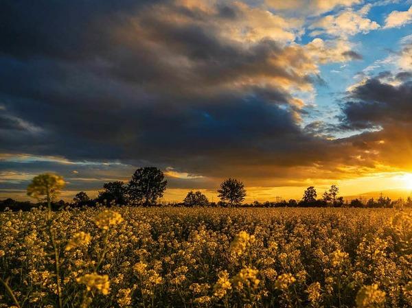 Die  Felder bei Nonnenweier im schönsten Sonnenuntergangslicht.