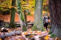 Im Herbst hat Wildschweinfleisch Saison in den regionalen Spezialitätenrestaurants