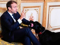 Macrons Hund Nemo pinkelt an den Élysée-Kamin