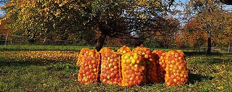 Wegen Frost: Apfelsaft in Südbaden wird knapp und teuer