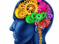 Wie weit ist das menschliche Gehirn erforscht?