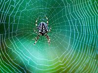 Wie spinnen Spinnen ihr Netz?