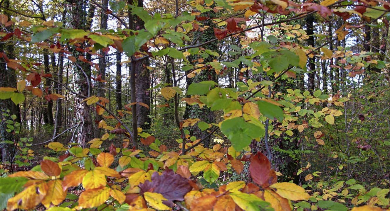 Der Hertinger Wald erfüllt eine Naherholgungsfunktion, ist aber auch Nutzwald.  | Foto: Jutta Schütz