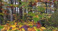 Zustimmung zum Forstbetriebsplan