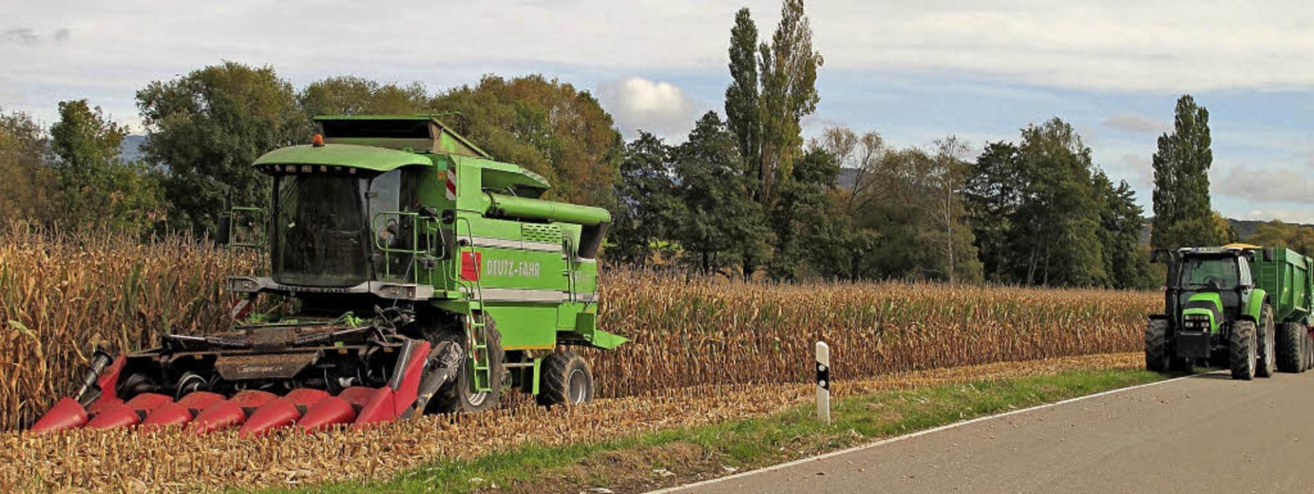 Der Mais enwickelte sich auf lehmigen ...gen Trockenphase im Sommer anders aus.  | Foto: Jutta Schütz