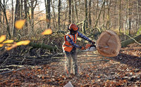 Waldgenossenschaft vermarktet Holz