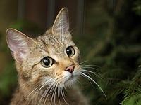 Land will Artenschutz fördern - diese Tiere sind bedroht