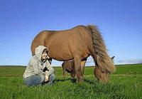 """Kútur ist mein Seelenpferd"""