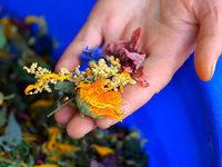 Macherinnen der Kräutermanufaktur erhalten Landwirtschaftspreis für Innovationen