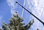 Fotos: Lörracher Weihnachtsbaum aufgestellt