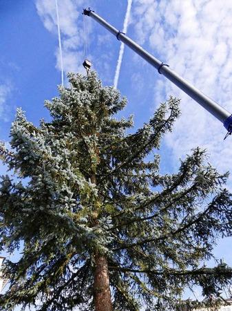 Der Baum misst geschätzte 18 Meter und musste zunächst mit dem Tieflader zum Alten Marktplatz gebracht werden. Dann hob ein Kran die Tanne in das 1,7 Meter tiefe Loch, das als Christbaumständer fungiert.