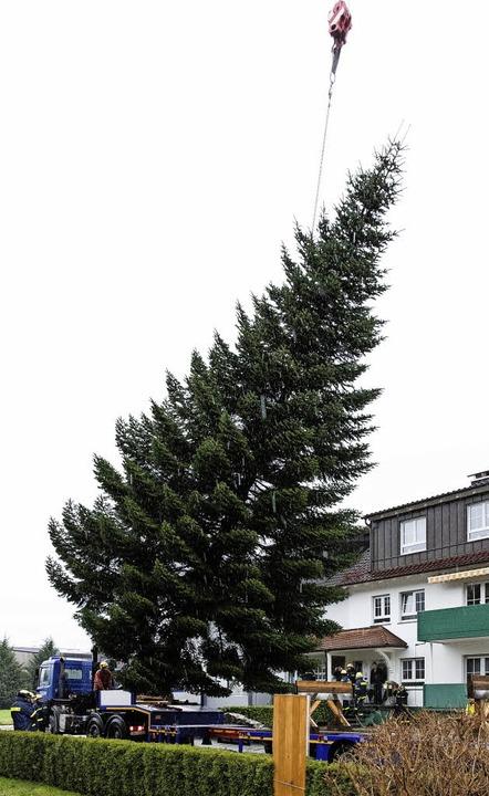 ein tannenbaum f r berlin waldkirch badische zeitung. Black Bedroom Furniture Sets. Home Design Ideas