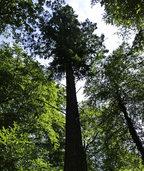 Gewinn, aber auch Sorgen mit Wald