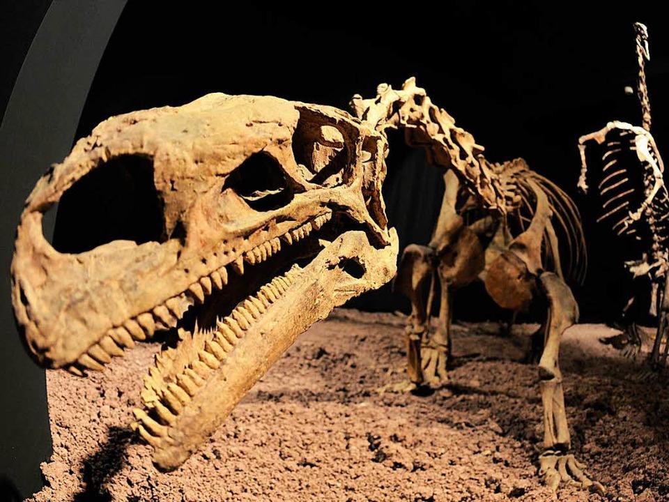Von Plateosauriern, hier ein Prachtexe...zweiten Mal ein Raubsaurier entdeckt.   | Foto: dpa