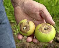 Hilfe für den Obstbau
