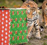 Geschenke für die Tiger