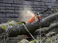 B 317 im April gesperrt: 505 Bäume müssen fallen