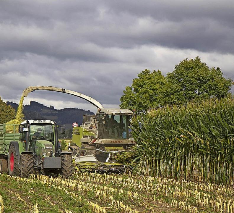 Jedes Jahr Mais ernten geht erst einmal nicht mehr.   | Foto: Daniel Fleig
