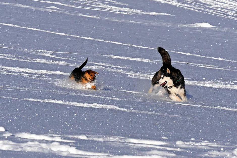 Zu zweit macht das Toben im Schnee noch viel mehr Spaß (Foto: Annemarie Krebs)