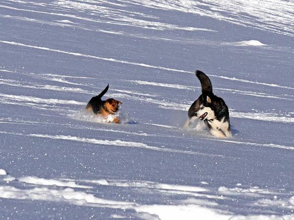 Zu zweit macht das Toben im Schnee noch viel mehr Spaß