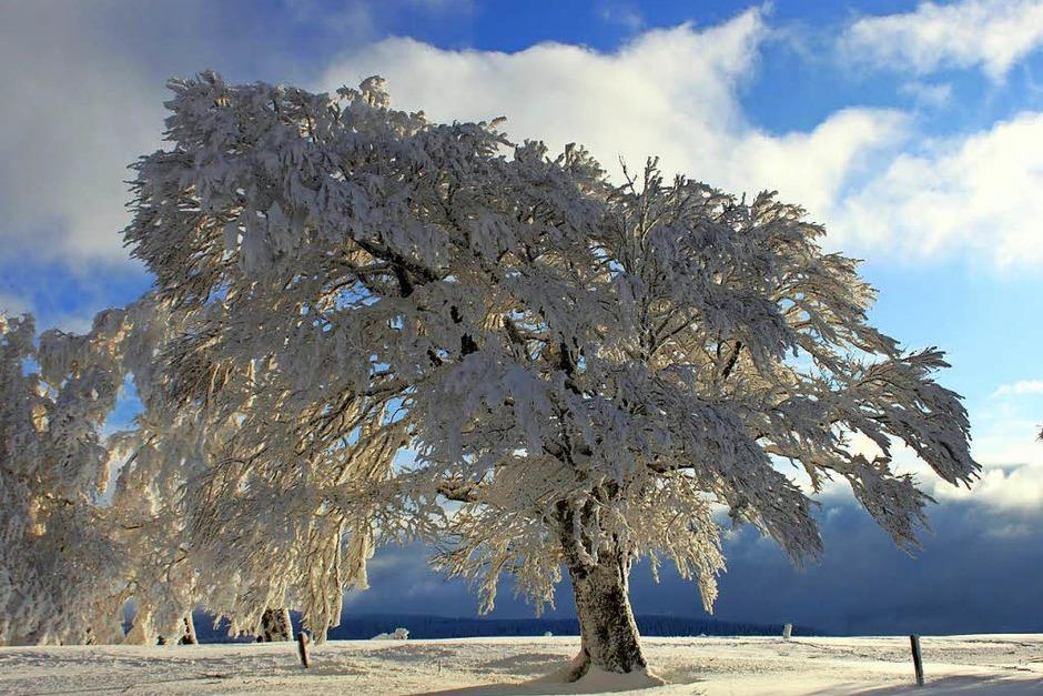 Diese magische Winterlandschaft bot sich kürzlich auf dem Schauinsland in Oberried. (Foto: Ursel Lorenz)