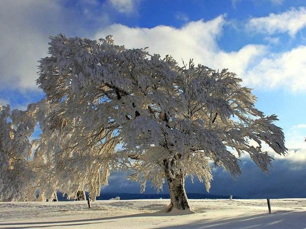 Diese magische Winterlandschaft bot sich kürzlich auf dem Schauinsland in Oberried.