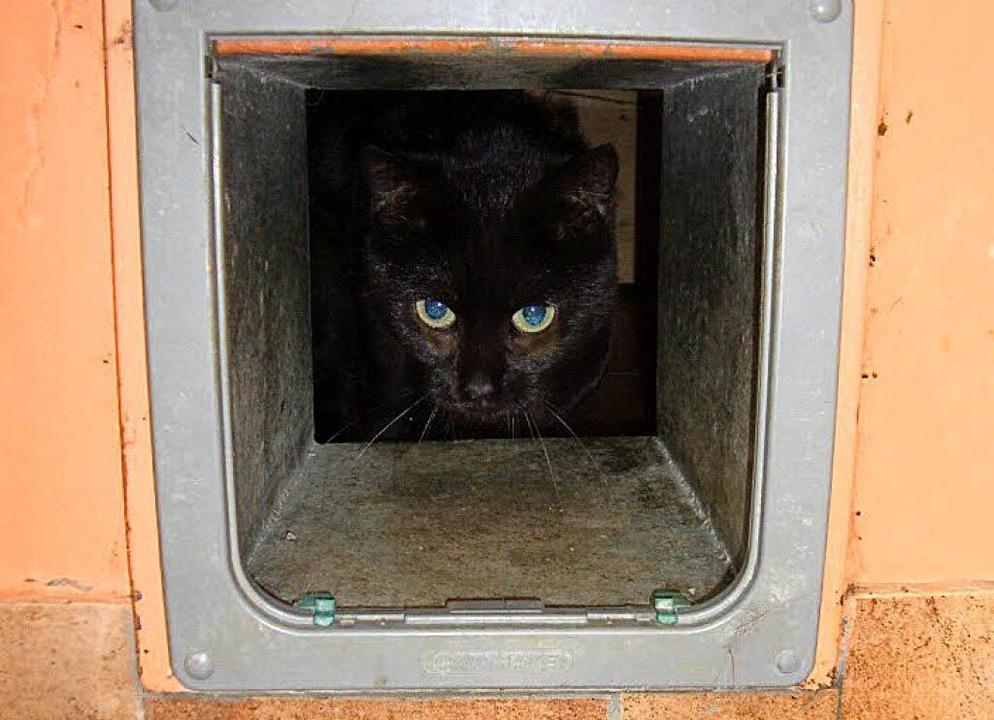 Mohrle guckt durch die Katzenklappe. S...erzingen auf ein neues Zuhause warten.  | Foto: Lena Steinbauer/Jonas Hirt