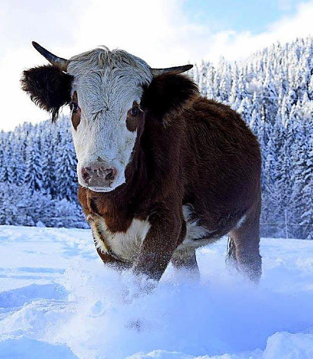 Spaß im Schnee   | Foto: Privat