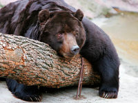 Winterschlaf der Tiere: Wenig erforschtes Phänomen