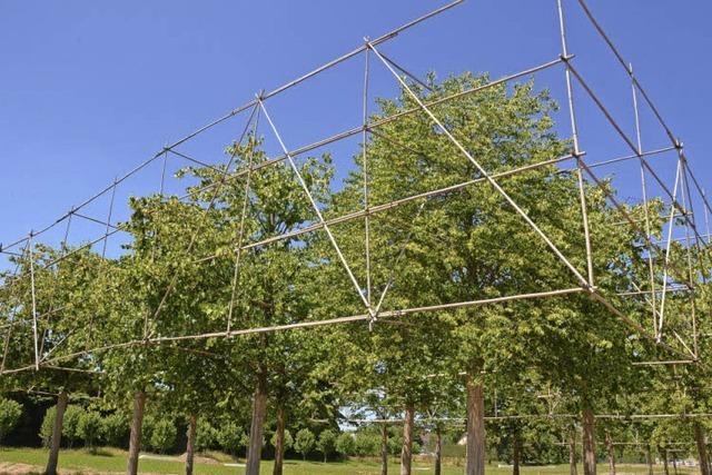 Quadratische Linden brauchen Zeit