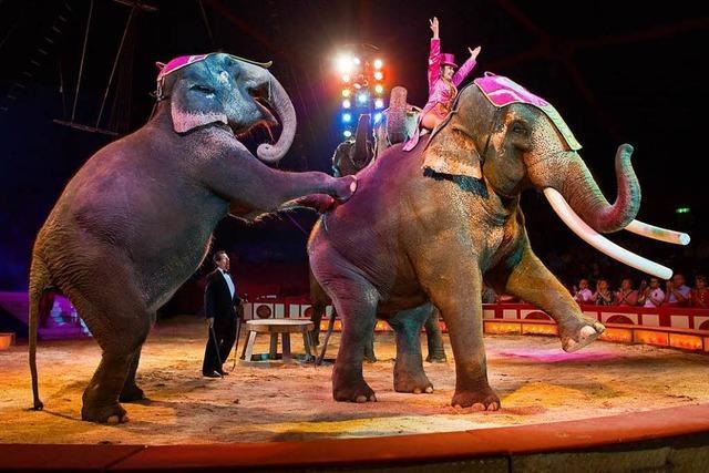 Bündnis will Elefantendressur im Europa-Park sehen