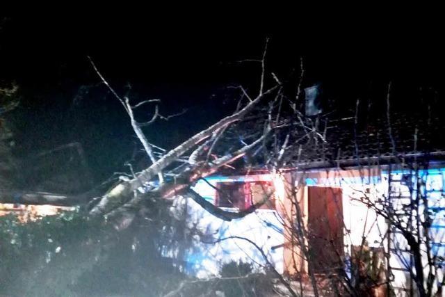 Birke stürzt in Wollbach auf ein Haus und beschädigt das Dach