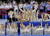 """China stoppt Handel mit """"weißem Gold"""""""