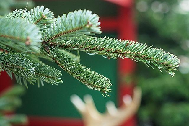 Wo Weihnachtsbäume eine zweite Chance bekommen