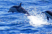 Neue Ruhezone für Wale und Delfine im Mittelmeer