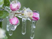 UND SONST NOCH: Frust nach dem Frost