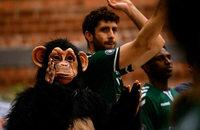 Die Affenbande ist zufrieden, aber hungrig nach mehr