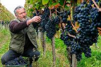 Das Baden-Württemberg-Weinbuch bietet wenig Überraschendes